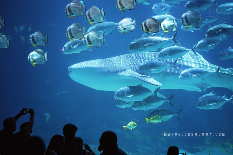Apr 17, · 21 Things to Do on Your First Atlanta Visit Georgia Aquarium. Georgia Aquarium is the largest aquarium in the nation and with 10 million gallons of fresh and salt water it is home to the largest aquarium habitat in the world.