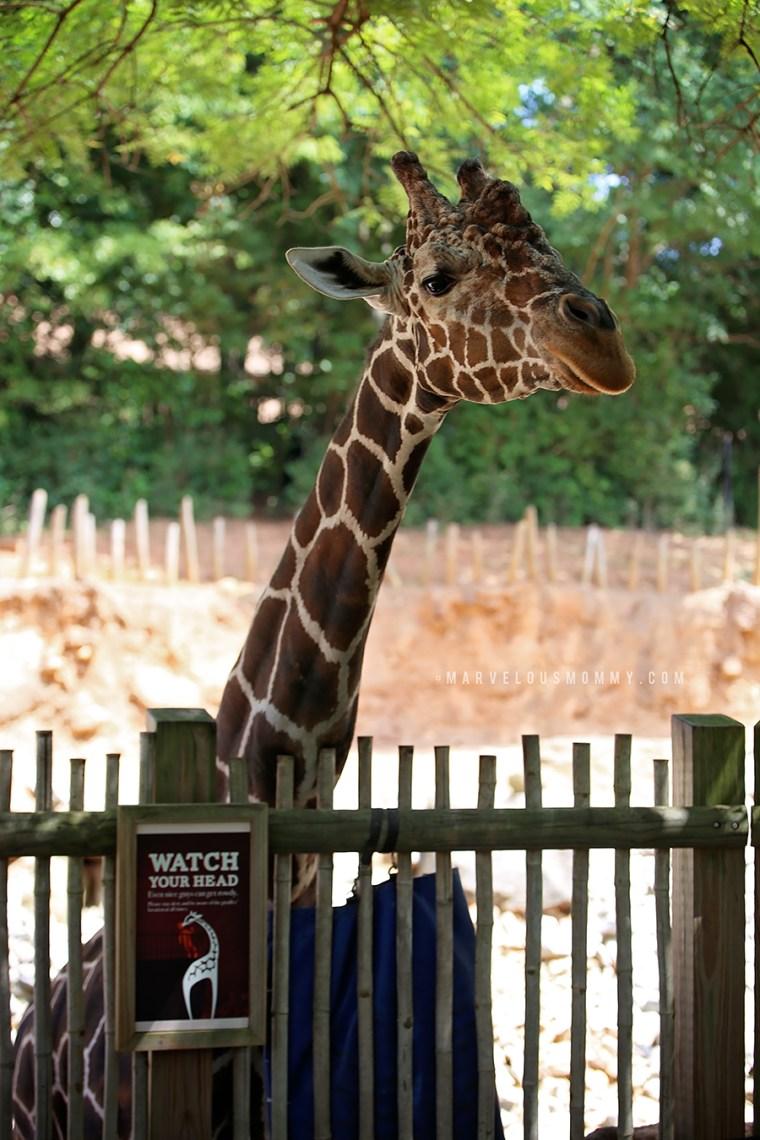 Zoo Atlanta-157-Edit_BLOG