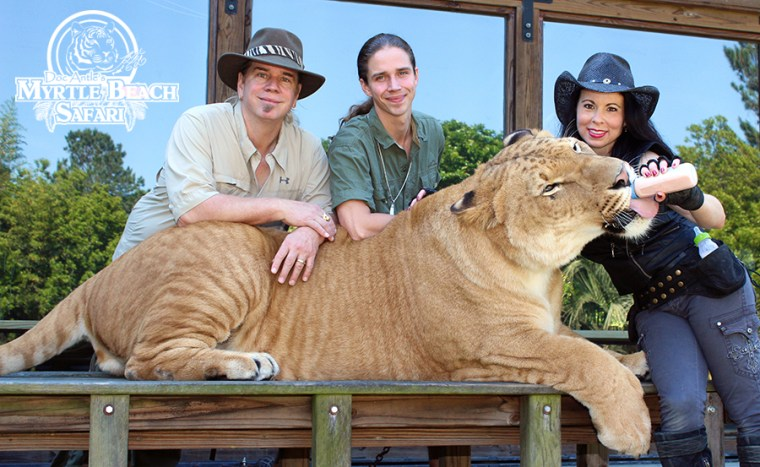 Liger, Doc, Kody, and Rajani BLOG