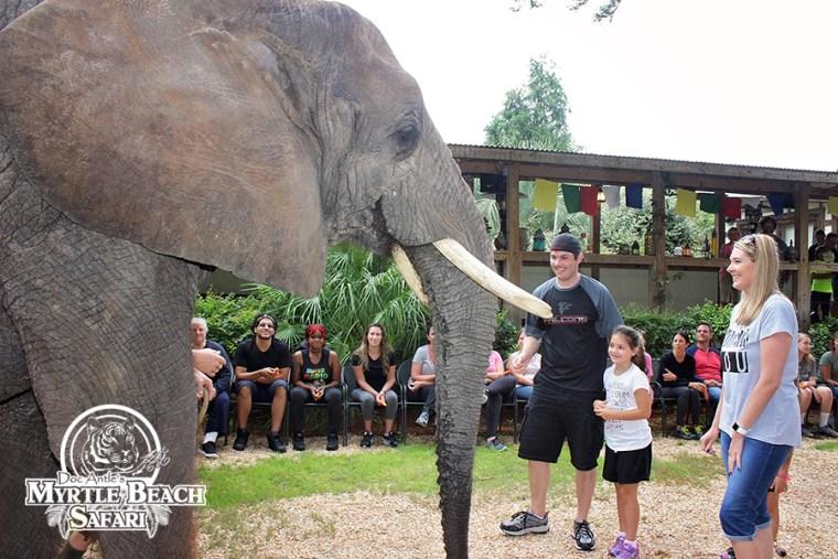 elephant (12) BLOG