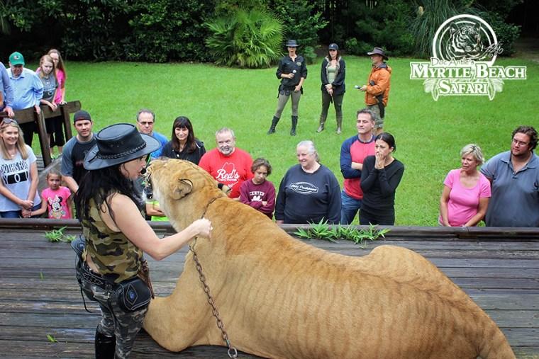 lion cub (321) BLOG