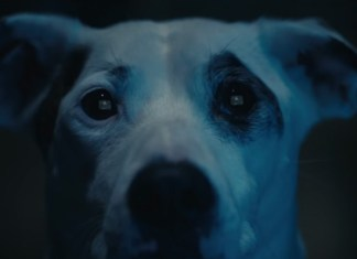 The Chemical Brothers estrena el video We've Got To Try