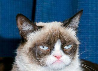 Grumpy Cat Festival Marvin playlist boletos evento