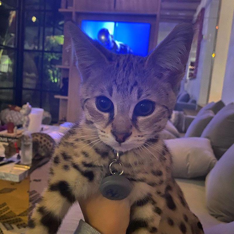 justin bieber gatos savannah boda hailey baldwin fotos