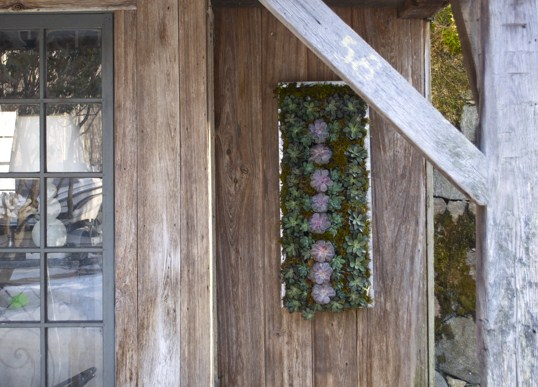 Living Walls and Interesting Wall Containers