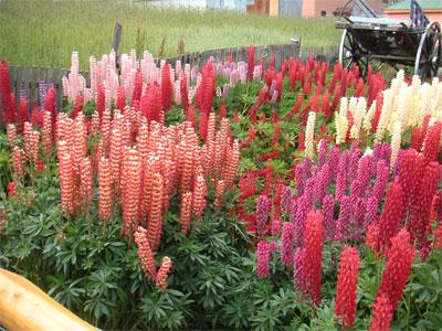 4 Great Spring Gardening Tips