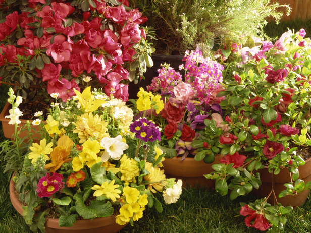 Arrange Containers to Maximize Landscapes
