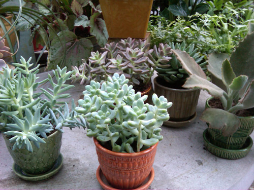 Preparing Container Plants for Winter