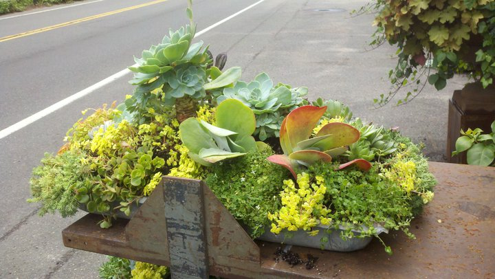Create Your Own Tabletop Garden for 2012