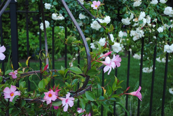 Wrought Iron Inspirations for Your Spring Garden