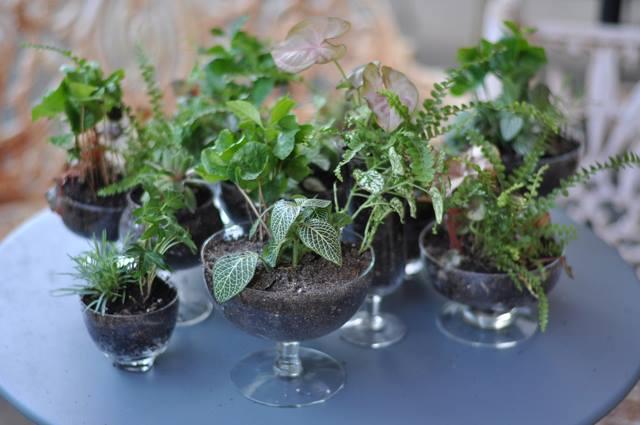 Understanding Container Soil