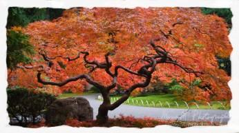 The tree of trees... Japanese Gardens; Portland, Oregon