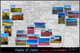 Fields & Vineyards 2010