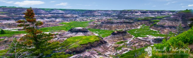 Horseshoe Canyon; badlands surrounded by prairie near Drumheller, Alberta, Canada.