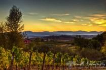 oregon chehalem valley vineyard
