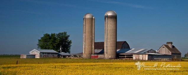 farm scene arcola illinois marvinm photoworks