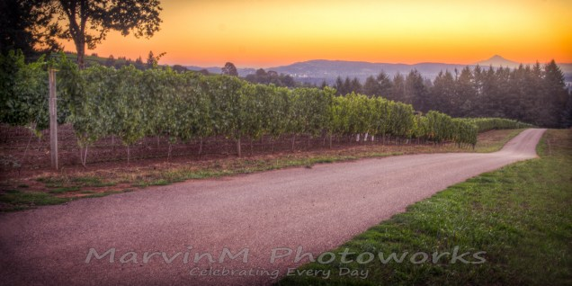 Durant, dundee, oregon, vineyards, willamette, mthood