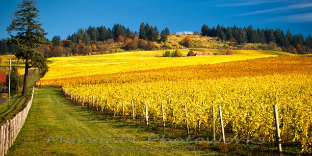 stoller, vineyards, oregon, vineyards