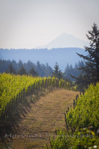 dundee willamette vineyard oregon