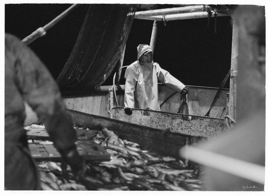 Retour de pêche - Port de Boulogne sur Mer - 62
