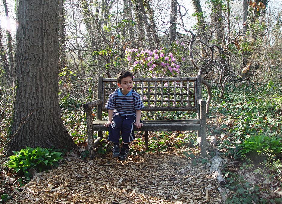 Garden blog by Mary Ahern Artist.