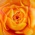 "Just Waiting - Free Spirit Rose Bud 36x36"" GW Oil on Canvas. $5,000 by the artist, Mary Ahern"