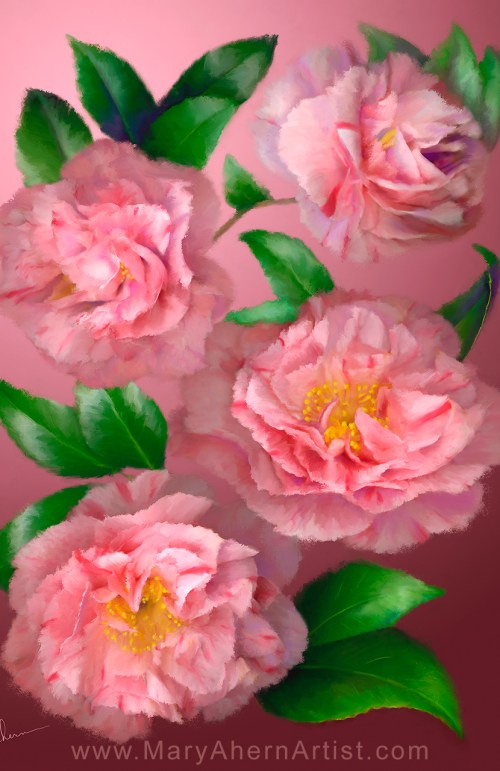 Pink Camellias by the Artist, Mary Ahern