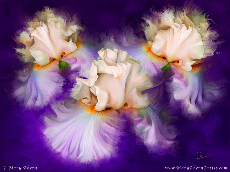 Dancing Iris Trio by the Artist, Mary Ahern