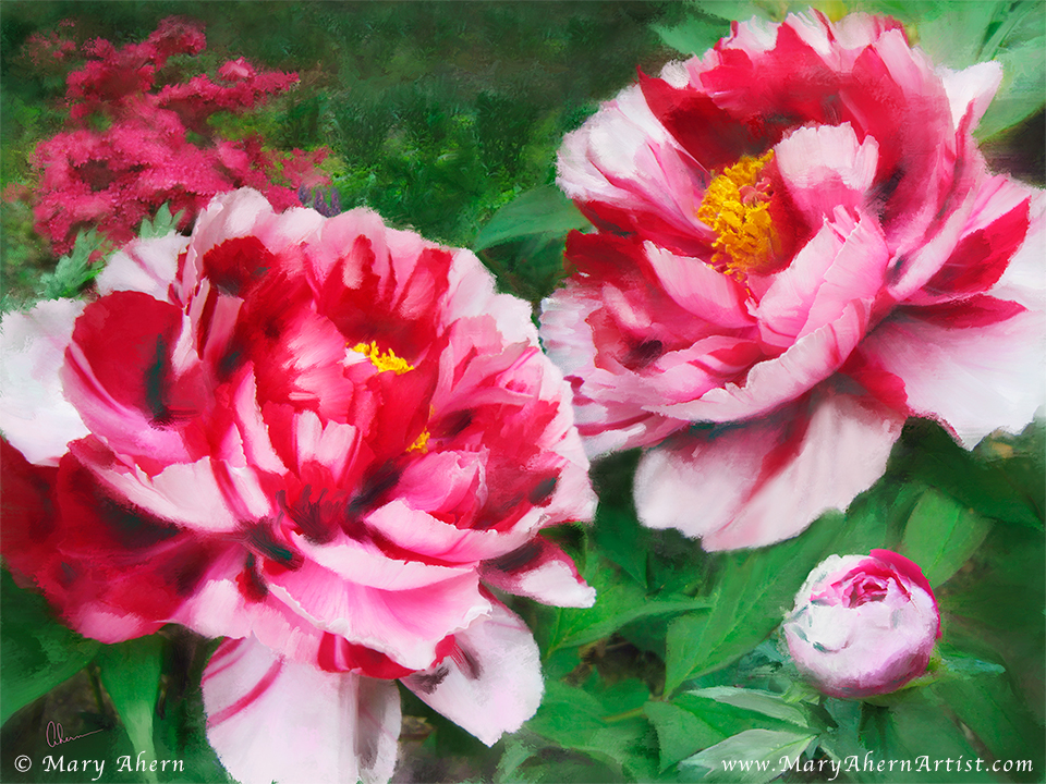 Fire Flame Peony by the Artist, Mary Ahern