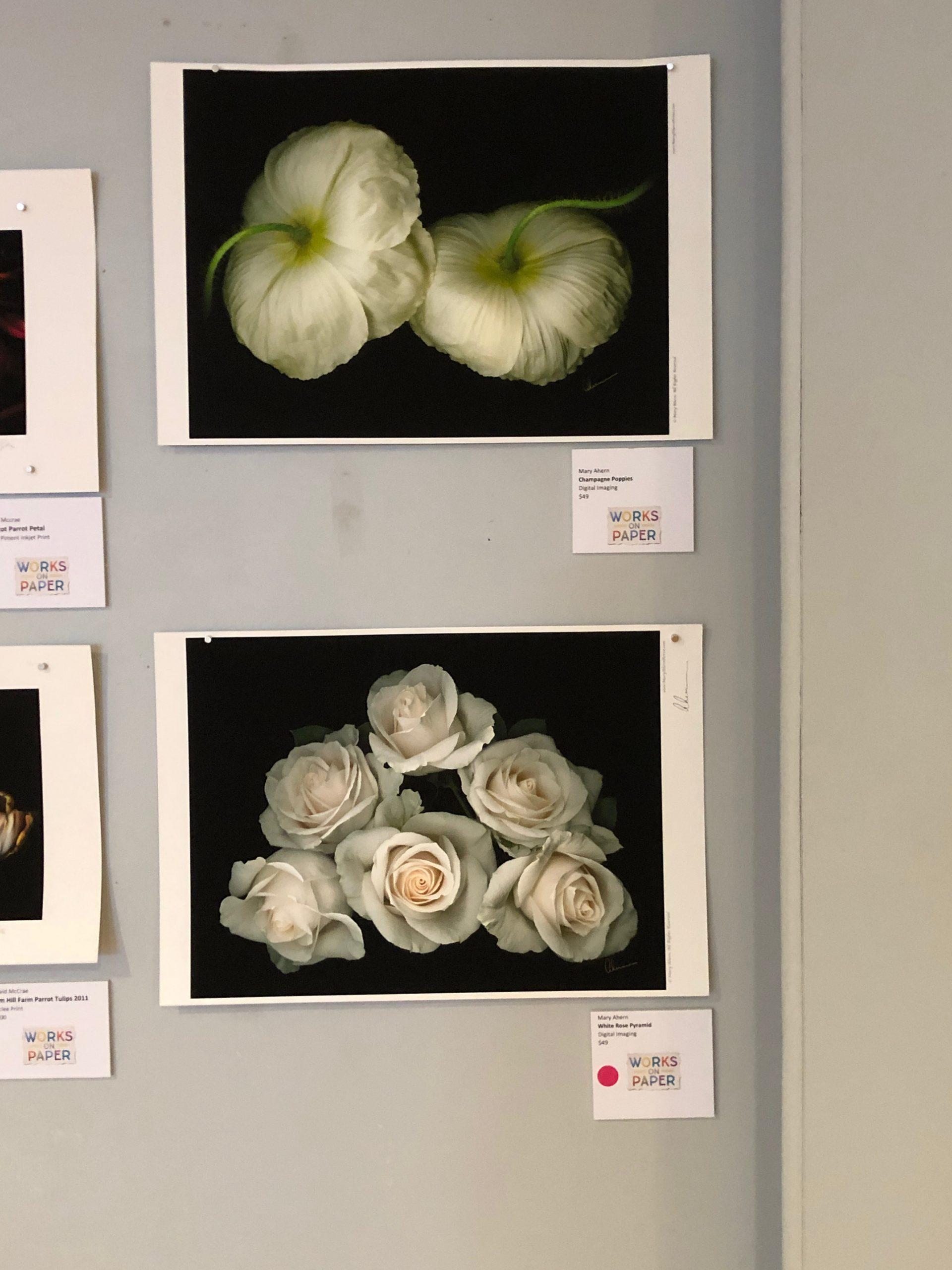 Mary Ahern Artist - Designer Prints