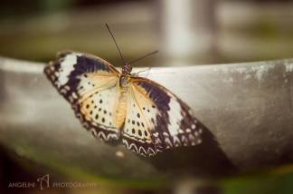 Orange and Black Spotted Butterfly