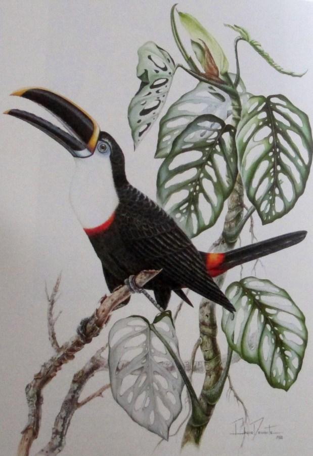 Bruna Demonte | Ramphastos Tucanis Cuvieri (Cuvier's toucan) 1988 gouache on paper 71x51 Brazil