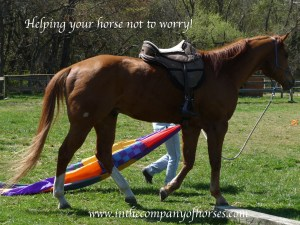 Helping horses not to worry.