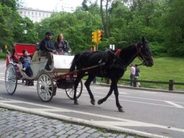 Horse & Buggy Ride