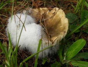 mushroomjuly-7