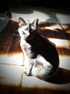Hermione in the sun