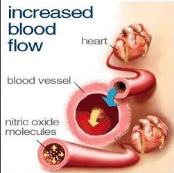 Nitric Oxide - comes from nitrates