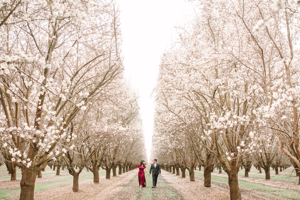 Couple in blooming almond orchard by Mary Costa Photography