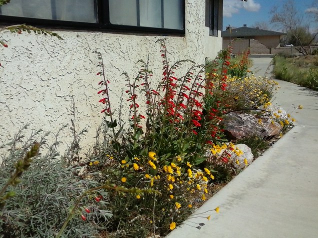 South Facing Flower Bed