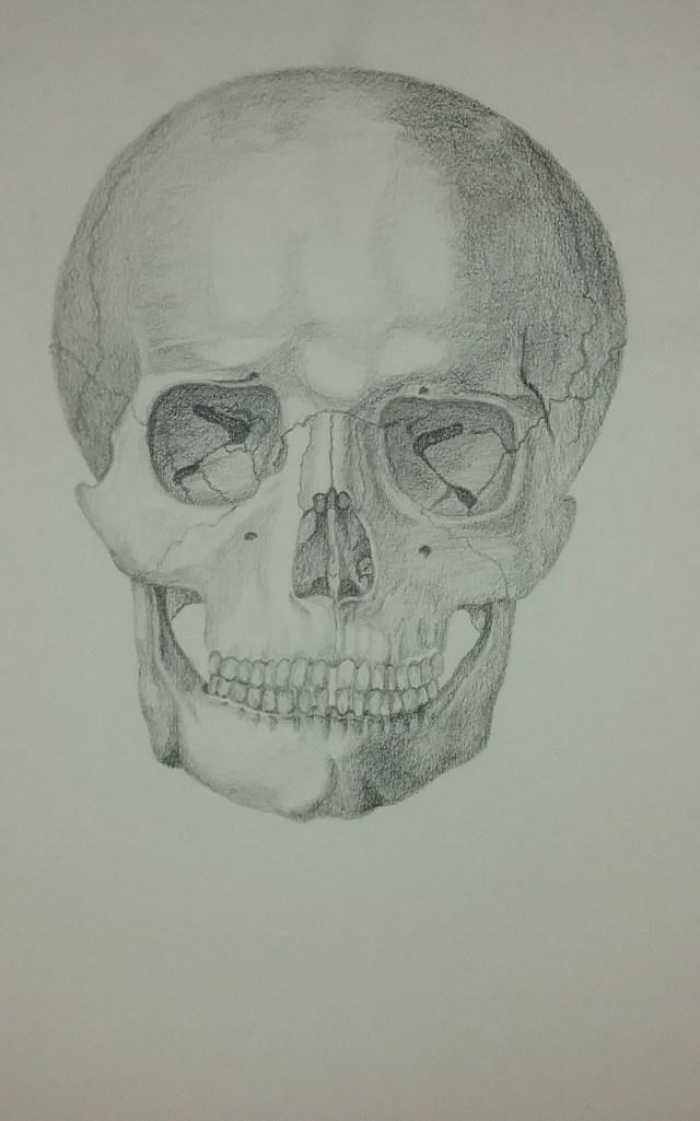 Skull by Mary Warner.