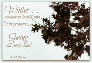 In the Middle of Winter- Guest Post