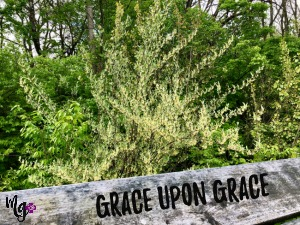Grace Upon Grace: God's Gift to Us