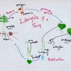 Morphology Tree Diagram Ford 4 2 Firing Order Plant Time Elsavadorla