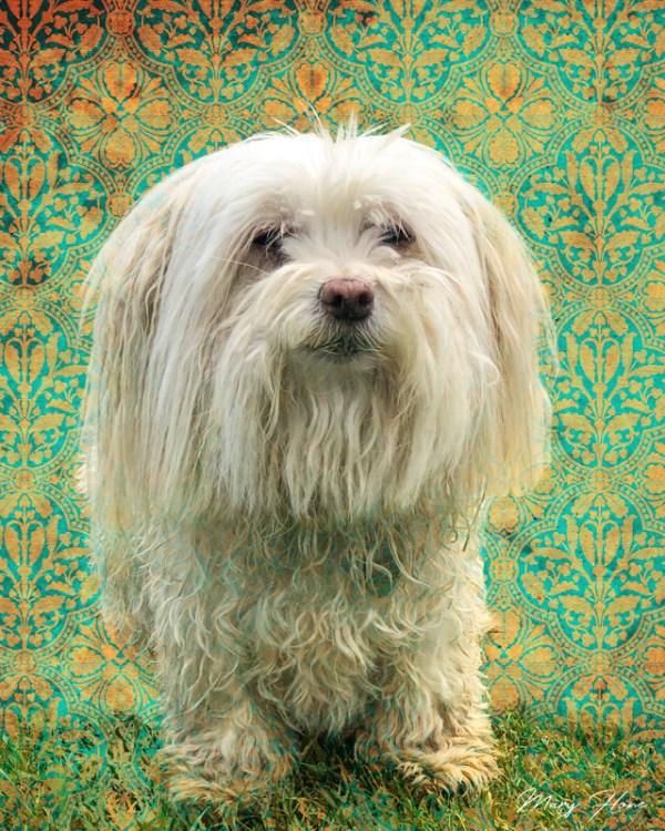 custom pet portrait, one of a kind