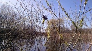 On budding pond