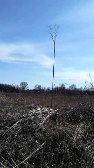 A budding tree stands alone