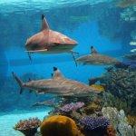Maryland Aquarium