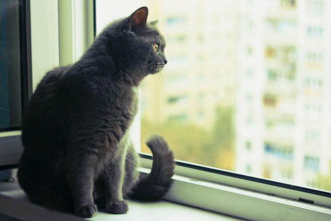 Maryland cat