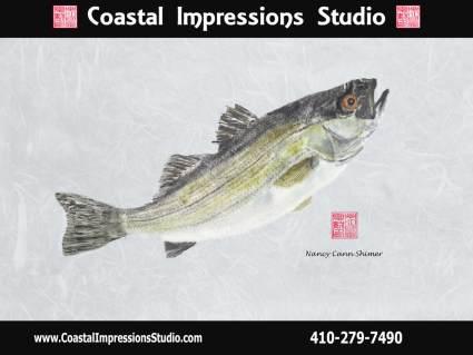 rockfish-blue-background-40x30-with-logov2_orig - Copy