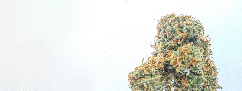 How to get your Medical Marijuana Card